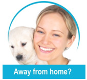 In home Pet Care Florida