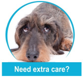 Pet Care Lutz FL