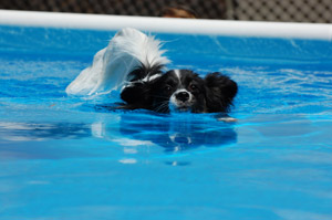 Bella-Swimming