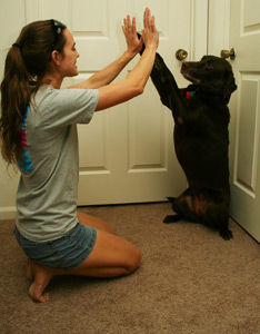 Basic Obedience Training near New Tampa