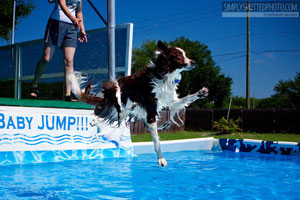 Dog training facility rental