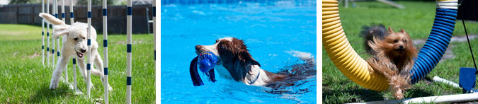 Dog agility class, watersports, group classes Tampa FL