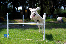 Intro to Agility