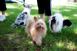 Puppy Training Lutz FL