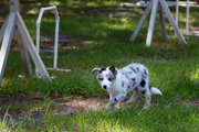 Puppy Kindergarten