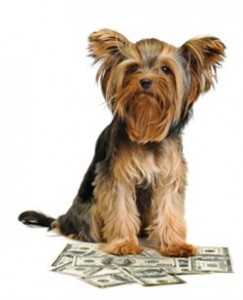 Courteous Canine Tampa Packages