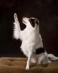 Dog trick dancing