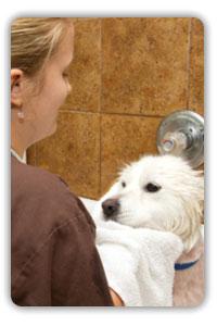 Dog bath Lutz FL