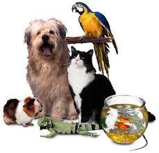 animalgroup