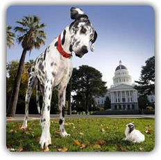 Great dane and tiny dog
