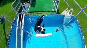 Ultimate Pool Shot