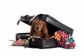 dog traveling