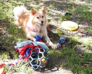 Dog Training near Welsey Chapel