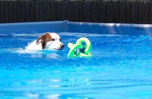 Zoomie-swimming