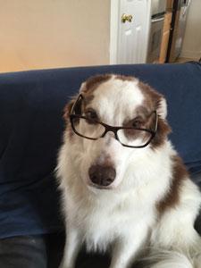 zoomie-genius-glasses