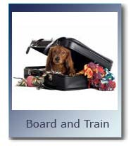 Board and Train