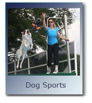 Dog Sports, Dock Jumping, Agility