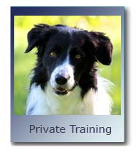 Private Dog Training