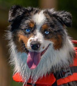 Courteous Canine Dog Training