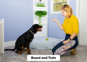 Board and Train in Tampa