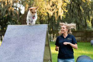 Dog Training in Tampa