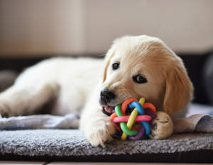 dog with textured rope ball toy in mouth