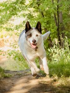 dog running on dirt nature trail